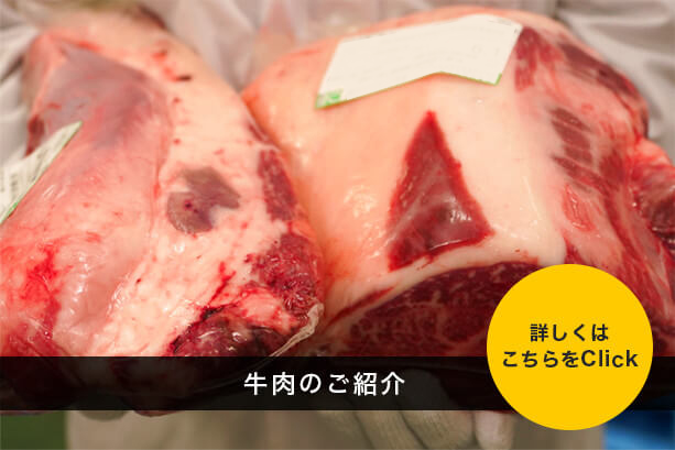 牛肉のご紹介
